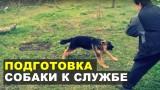Работа с молодым щенком немецкой овчарки. Дрессировка собак