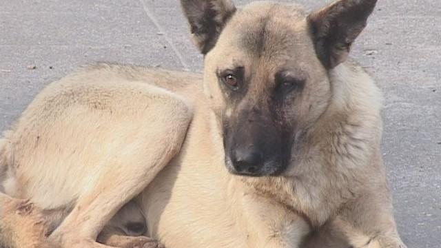 В Украине ужесточили наказание за жестокое обращение с животными