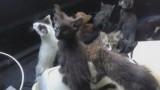 Приют «Радуга» — концлагерь для животных