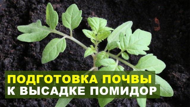 Подготовка почвы под рассаду помидор