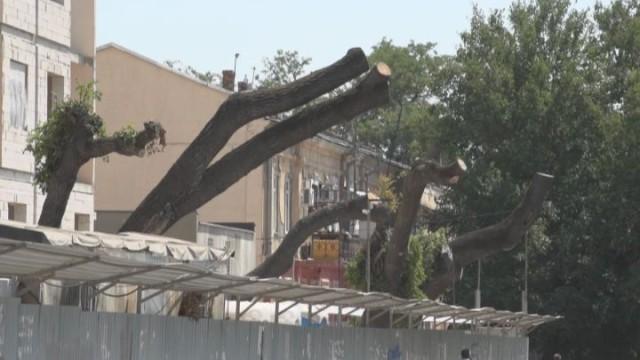 Kadorr Group уничтожает зеленые легкие города
