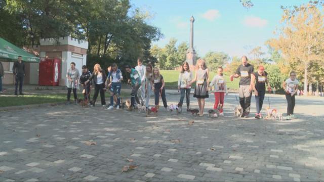 В Одессе состоится Дог-марафон