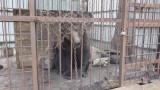 Одесситы защитят диких животных