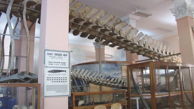 Скільки живет кит? / Немалі питання
