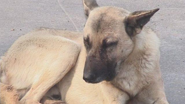 Скорая помощь для животных появится в Одессе