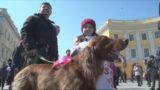 У добра нет пород и границ: марш спасенных собак