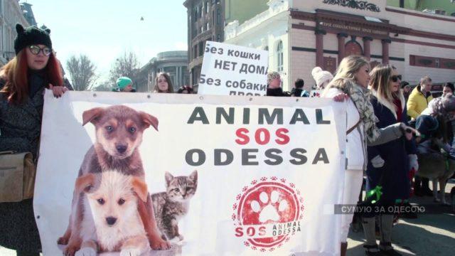 Марш спасенных собак. У добра нет пород и границ.