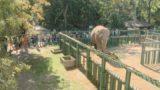 «День малышей» в зоопарке