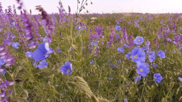 Национальный природный парк «Тарутинская степь»