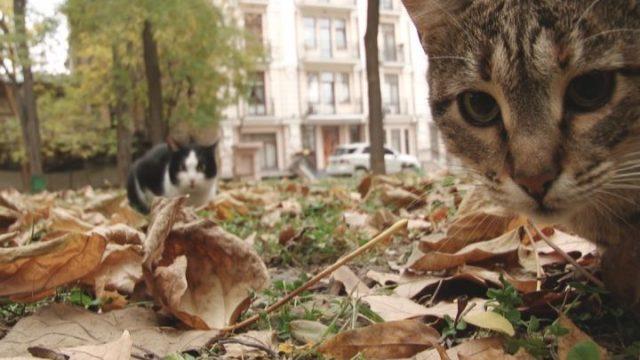 Коти Пале-Роялю