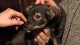 За реєстрацію собаки доведеться платити 80 гривень