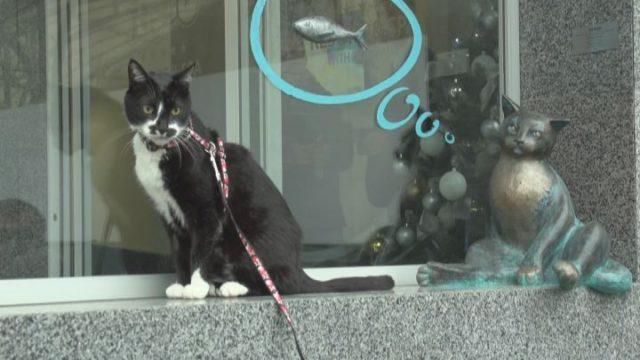 Нова скульптура «Одеського кота»