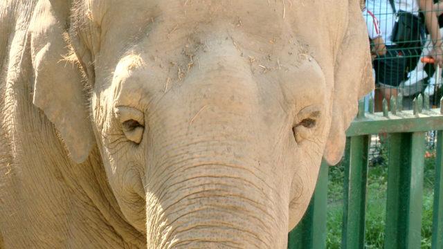 Чому слон називається «слон»? / Немалі питання