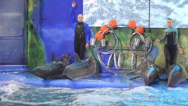 Любов і дельфіни в одеському дельфінарії