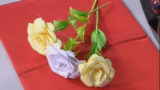Чайна троянда