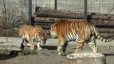 Весна в Одеському зоопарку