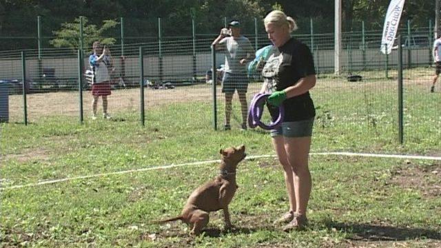 Dog Puller Спорт Майбутнього