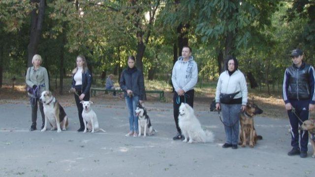 Сидіти, лежати, поруч. Тренування для собак у парках міста