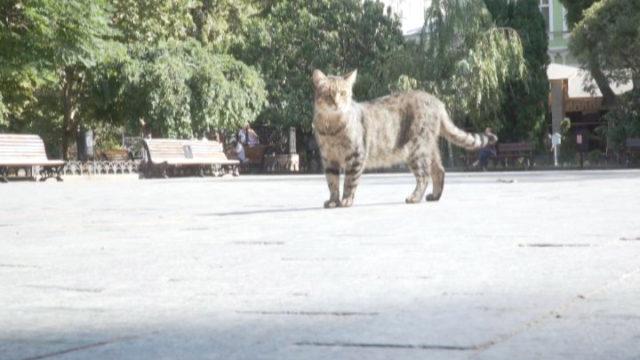 Вусолапохвоста Одеса. Думки містян про становище безпритульних тварин
