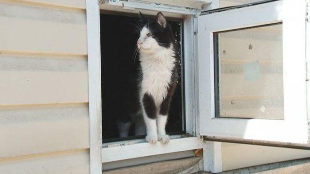«Котедж» притулок хоспіс для котів