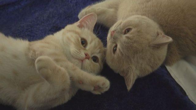Виставка котів на морвокзалі