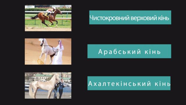 Яка найкраща порода коней у світі? / Немалі питання