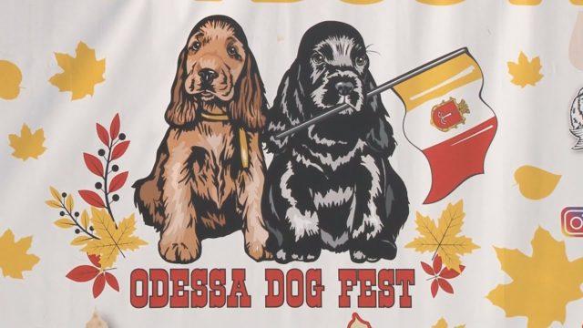 Мер і одесити на Dog Fest