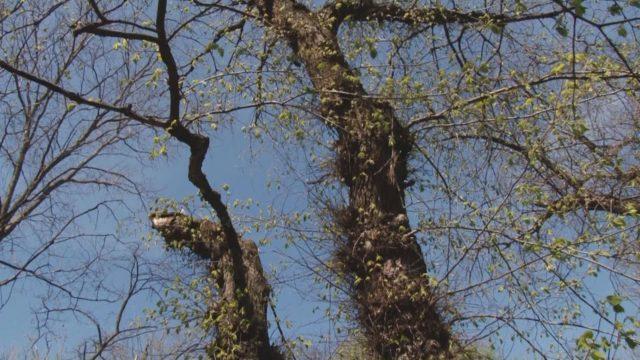 Вирок деревам: в Одесі дедалі менше зелених зон