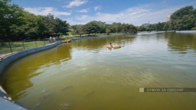 Парк Перемоги один з найкрасивіших, великих і упорядкованих парків Одеси.