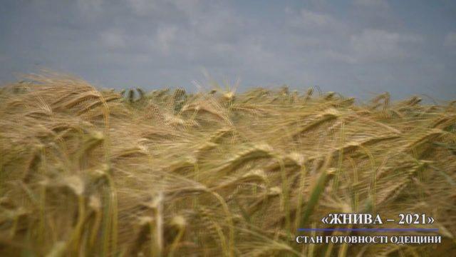 На Одещині стартували жнива